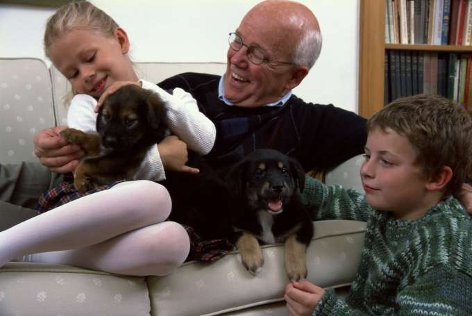 stock image of grandfather playing with grandchildren and puppies