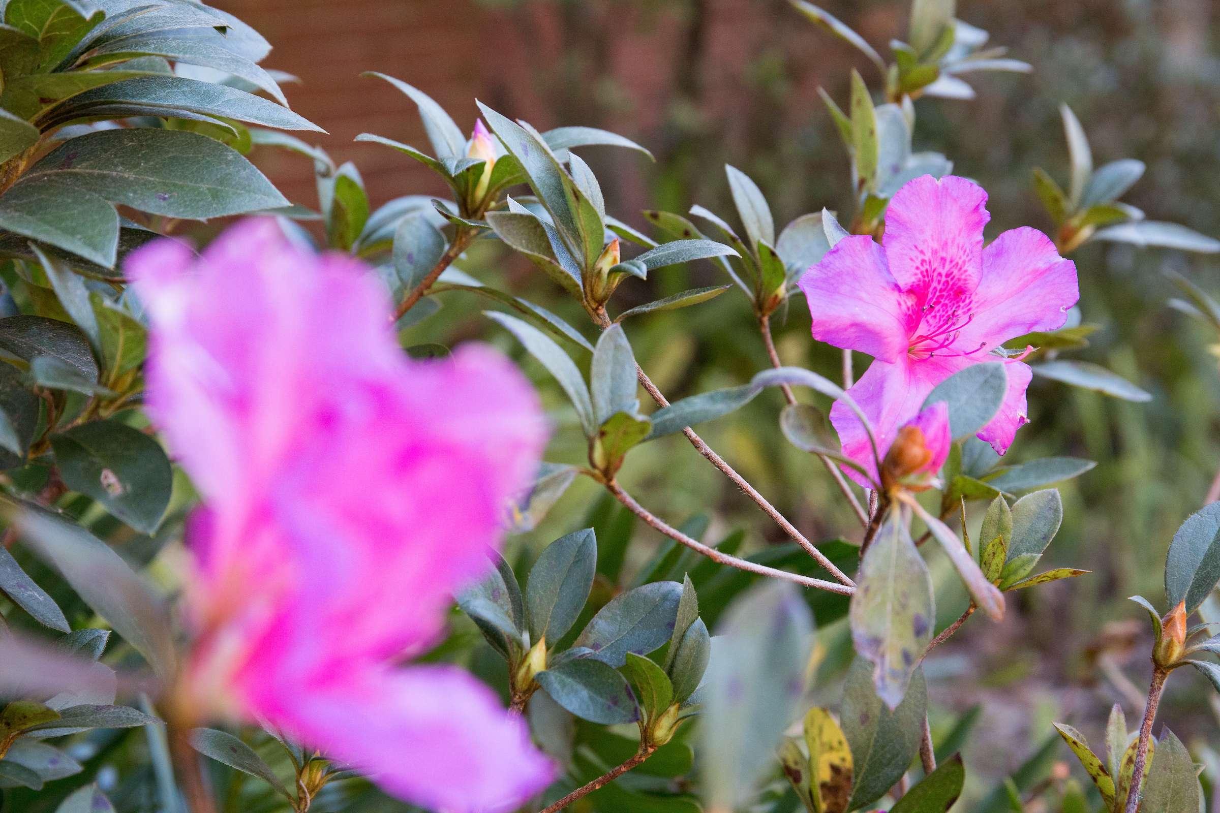 Pruple flowers